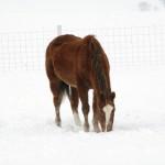 Wisconsin Mustang © Doug Stener