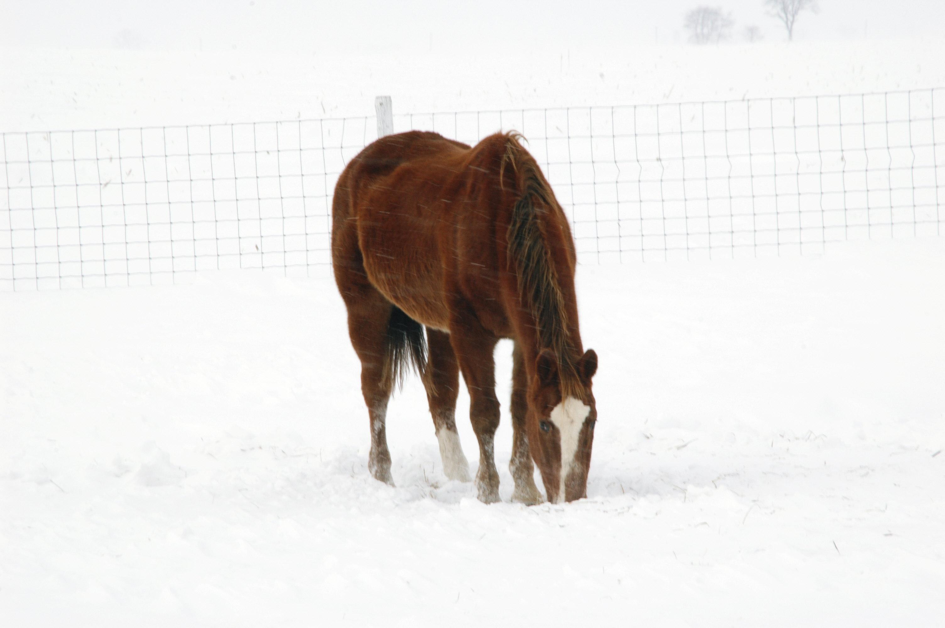 Wisconsin Mustang