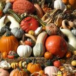 Pumpkin Stack © Kathleen Buckland, 2012