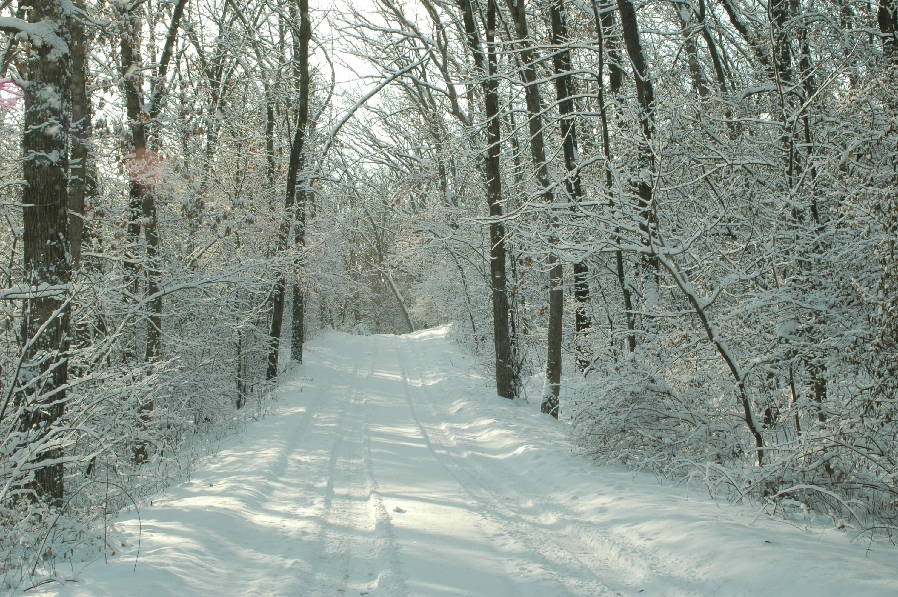 Snow Trail By Doug Stener Solace In A Book