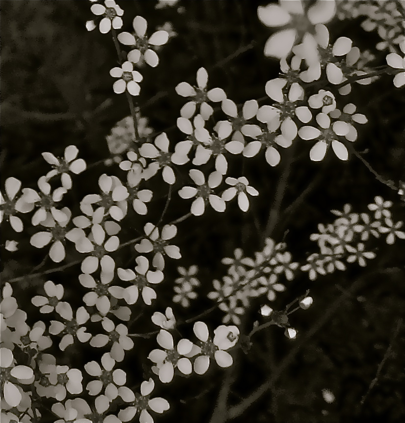 Glimpse of Solace: Bloom in Black and White