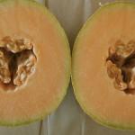 Melons © Ellen Wade Beals, 2013