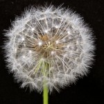 Just before you make your wish © Ellen Wade Beals, 2014