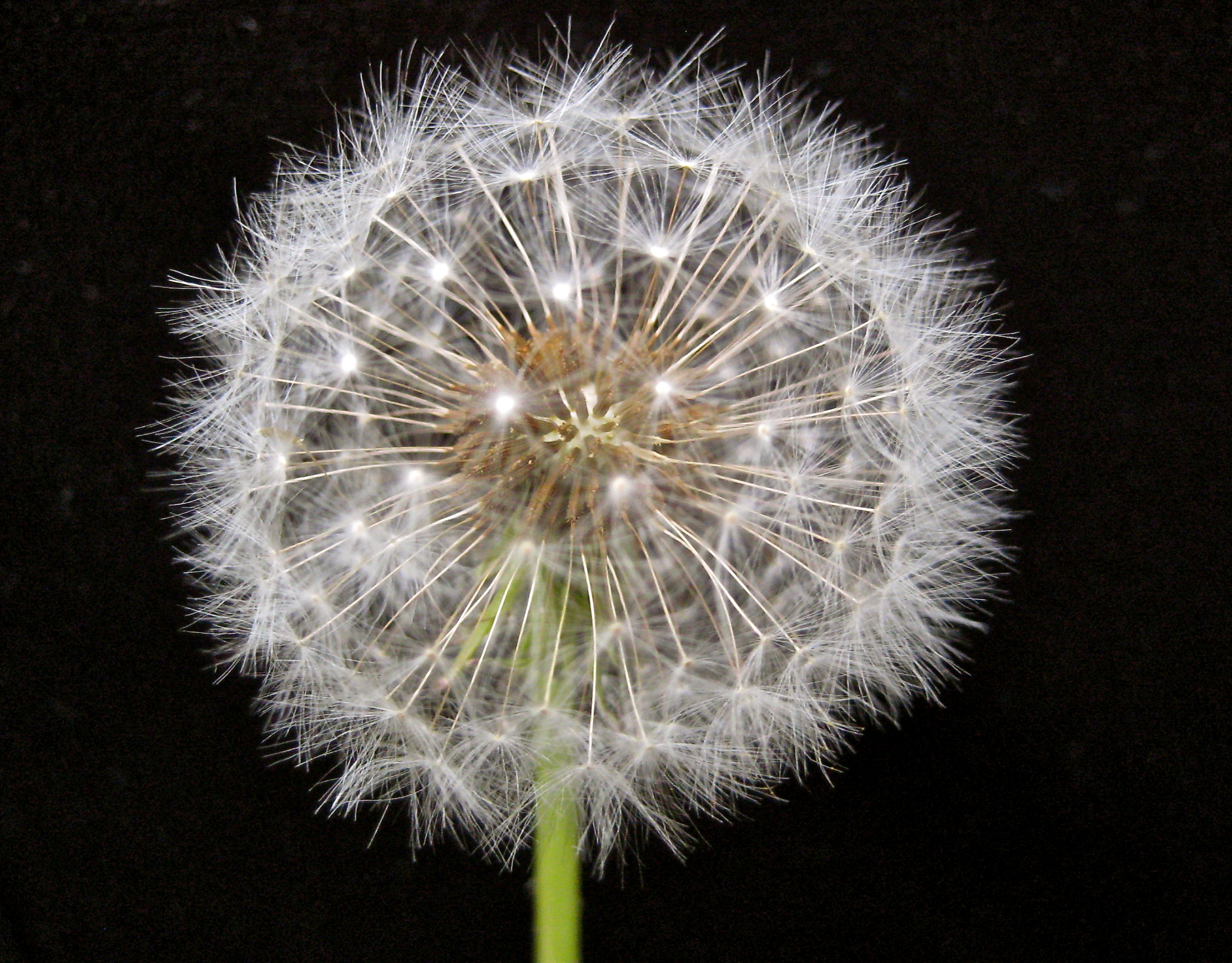Glimpse of Solace: Dandelion wishes and other pics