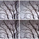 Branches in bundles © Ellen Wade Beals, 2013