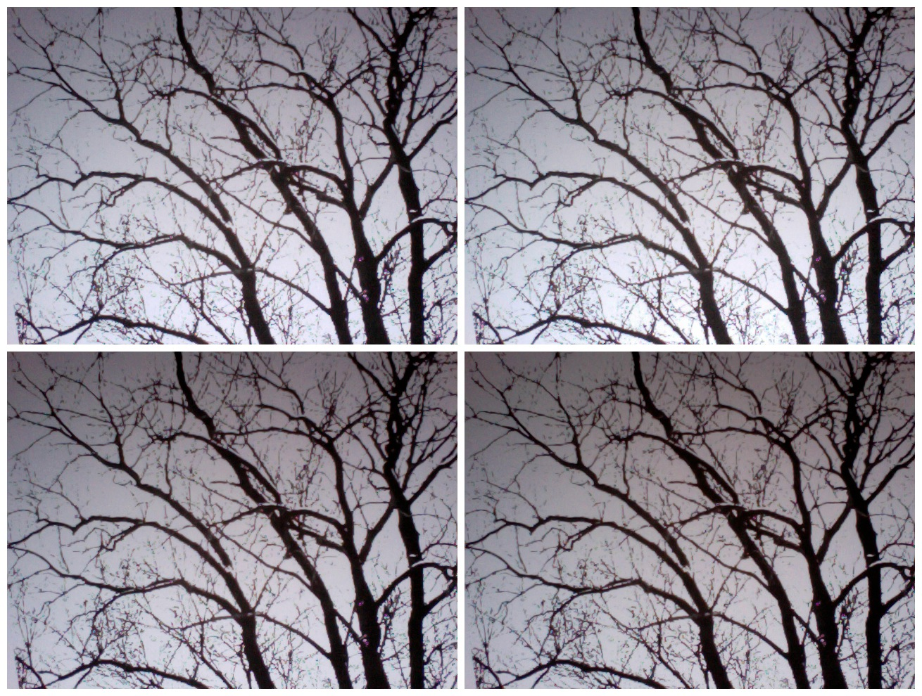 Glimpse of solace: Branches