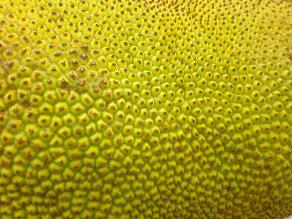 Jackfruit up close © Ellen Wade Beals, 2015