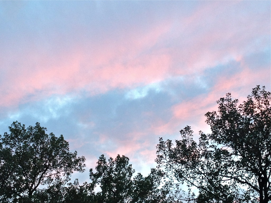 Pink sky at night (8:19:15)  © Ellen Wade Beals, 2015