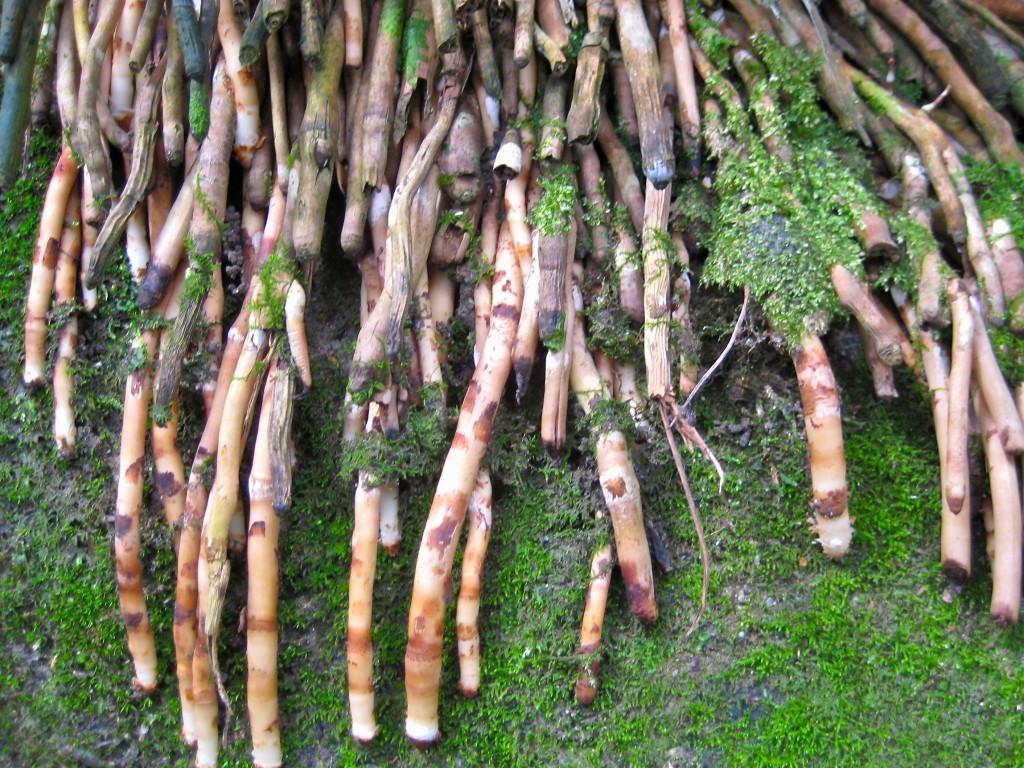 Root, root, root © Ellen Wade Beals, 2105
