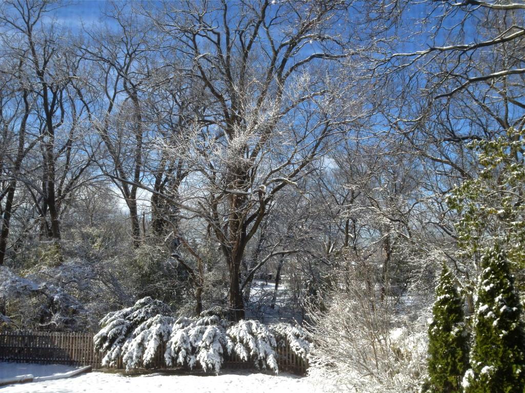 Out my bedroom window 11-21-15 © Ellen Wade Beals