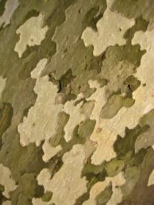 Camouflage bark © Ellen Wade Beals, 2016