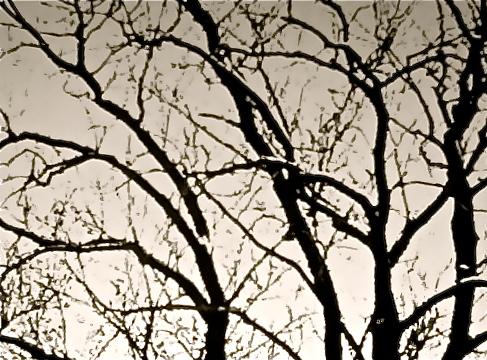 Bare branches © Ellen Wade Beals, 2013