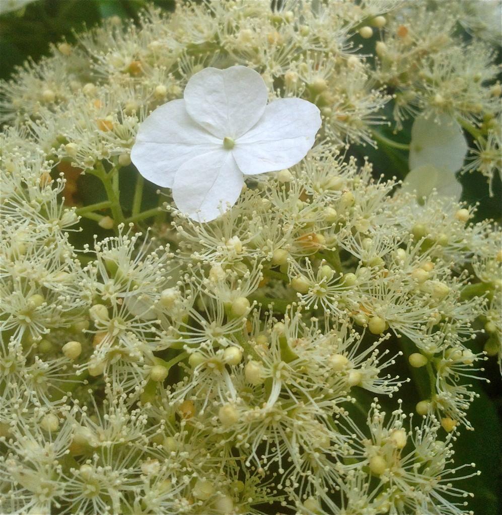May flower, no. 1 © Ellen Wade Beals,