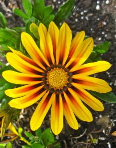 Flower number 1 © Ellen Wade Beals, 2016