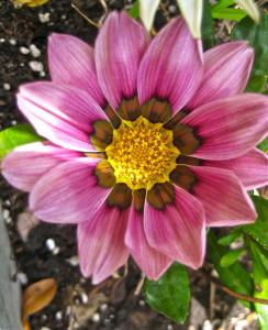 Flower number 3 © Ellen Wade Beals, 2016
