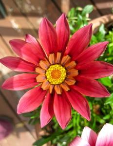 Flower number 4 © Ellen Wade Beals, 2016