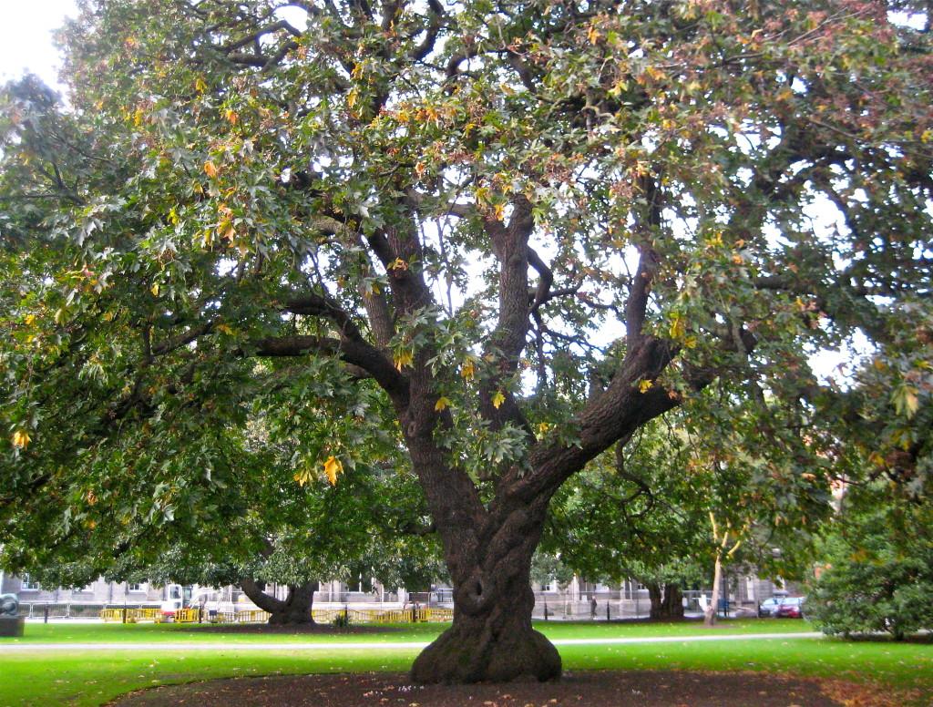 Tree at Trinity © Ellen Wade Beals, 2016