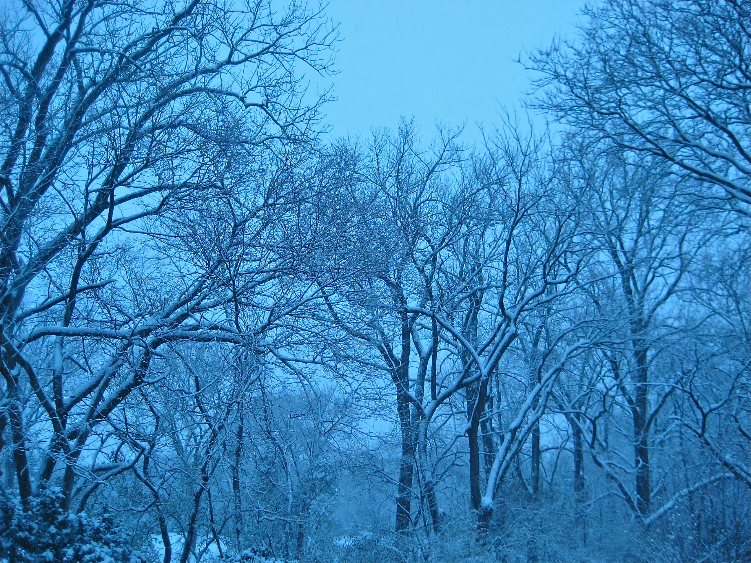 Glimpse of solace: trees in winter