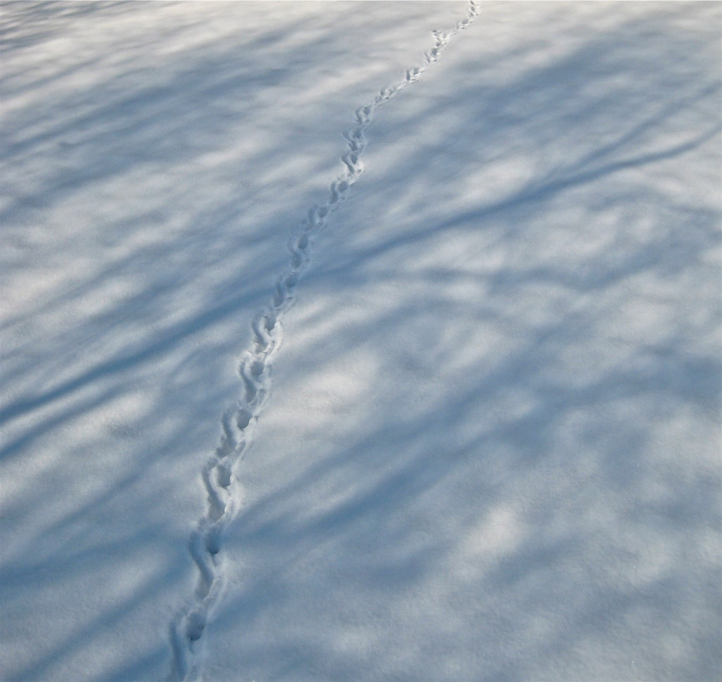 Snow trail, #1 © Ellen Wade Beals, 2013