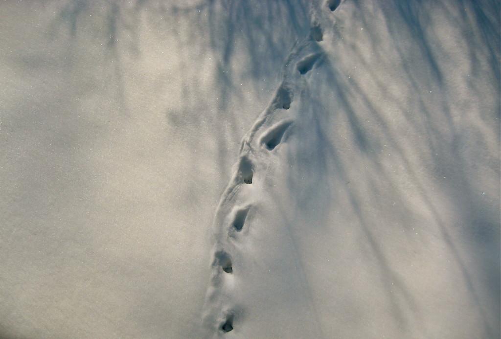 Snow trail, #2 © Ellen Wade Beals, 2013