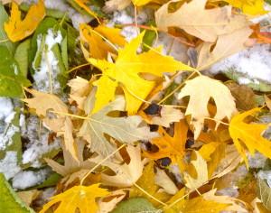 November foliage © Ellen Wade Beals, 2017