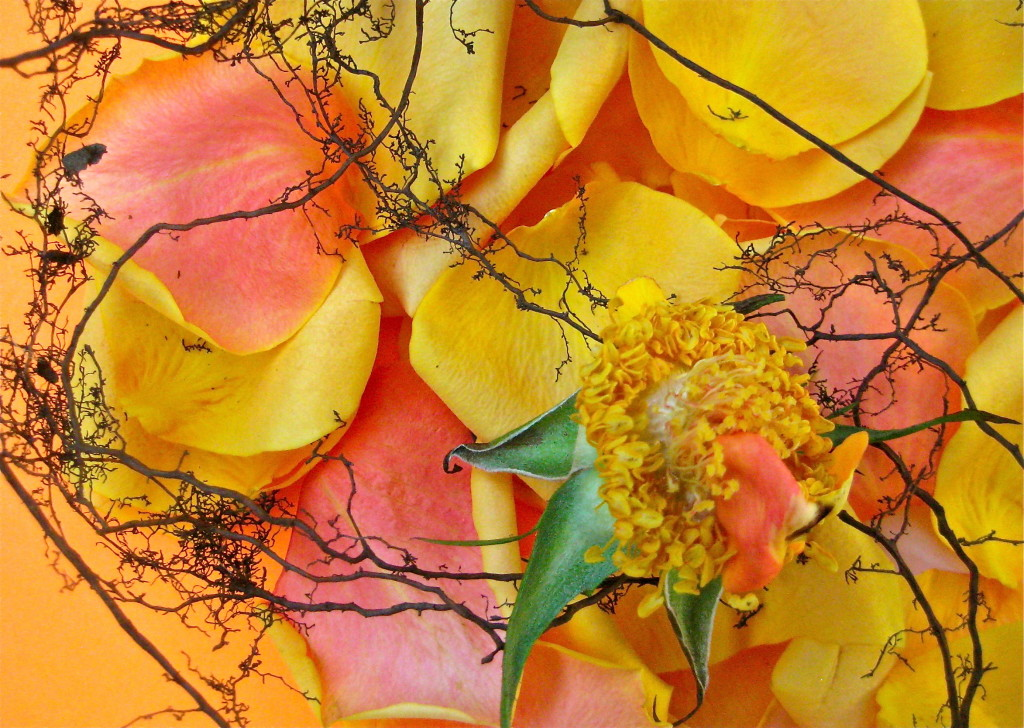 Flower deconstructed © Ellen Wade Beals, 2014