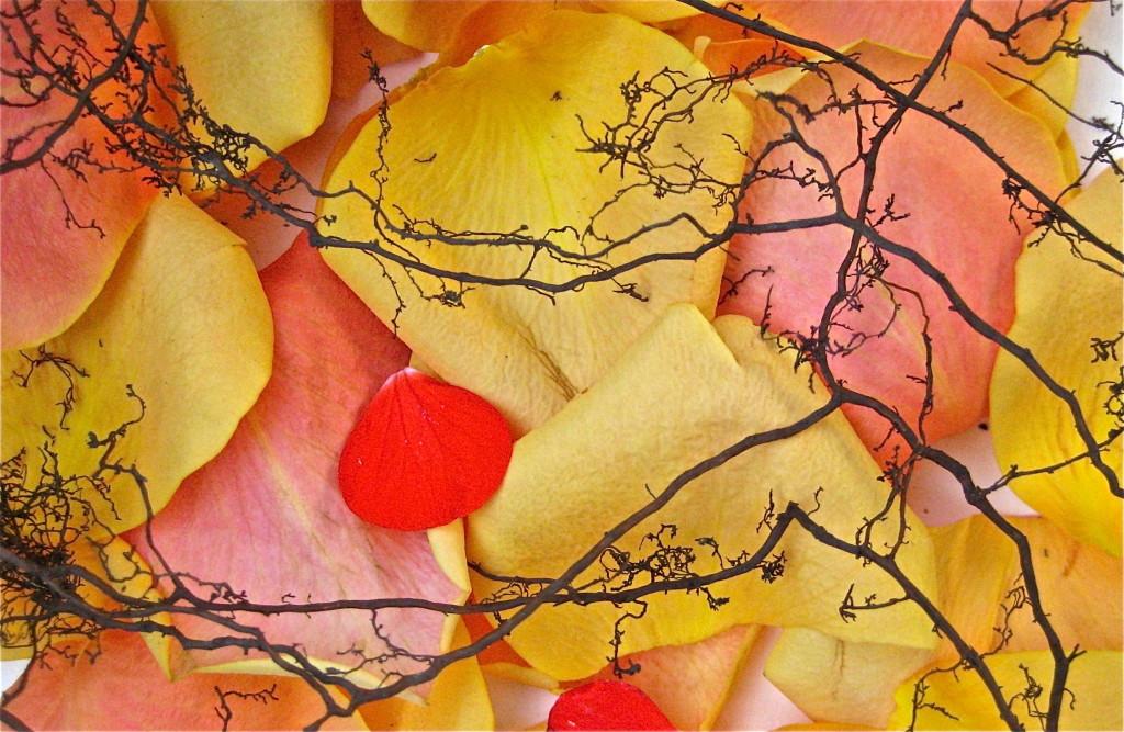 Roots and petals © Ellen Wade Beals, 2014